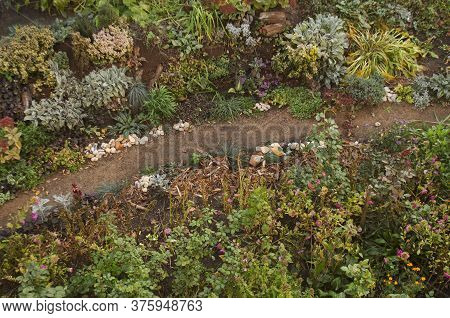 Natur Fall Garden Growing. Autumn Garden Background