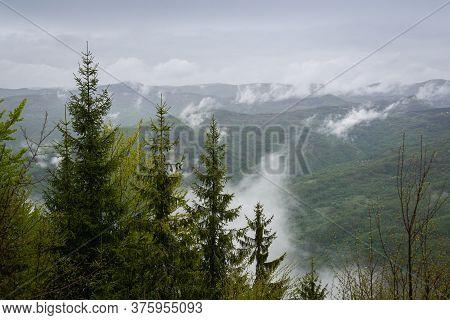 Rain In Pine Forest Overcast Rainy Day On Tara Mountain In Serbia. Raining In Forest. Rain In Mounta