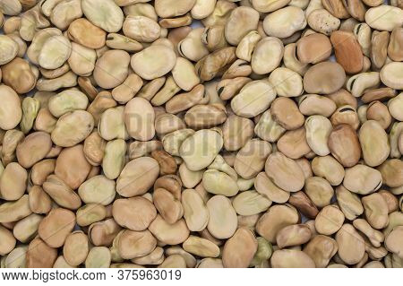 Raw Dry Broad Beans Sprinkled As A Background. Bean Texture Is Clearly Visible. Place For Text