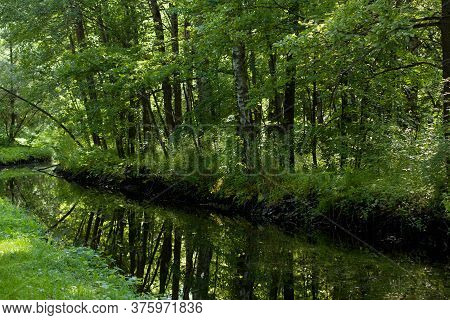 Wonderful Green Sunny Forest With A Pond In Which Trees Are Reflected