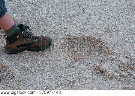 A Shoe Is Used To Measure The Size Of An Elephant Spoor In A River Near Usakos