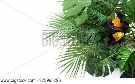 Home tropical garden. Tropical Green leaves. Summer. Green leaf. Monstera.