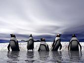 penguins starting a swim poster