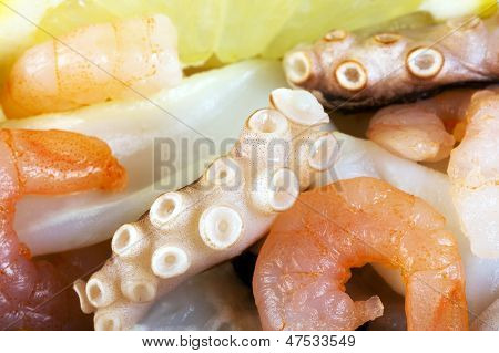 poster of boiled shrimp macro prawns and octopus background