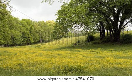 Wild Flowers Across The Meadow