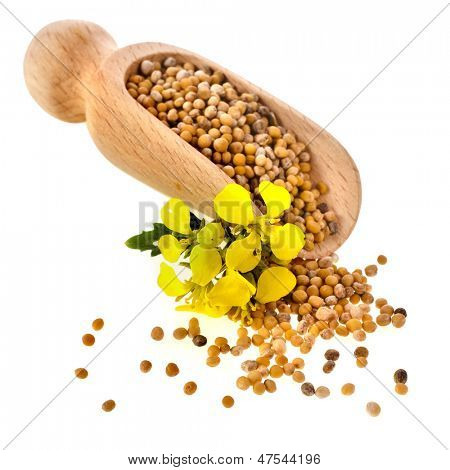 Mustard seeds heap in wooden scoop spoon isolated on white background