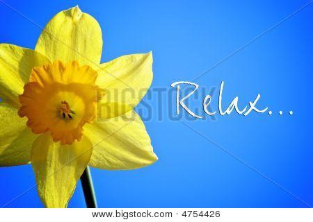Relax Daffodil