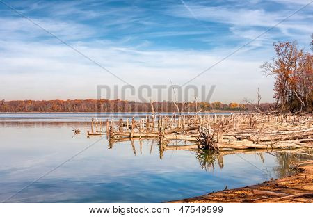 Lake And Fallen Trees