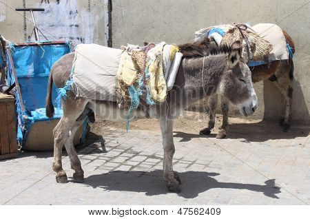 A pair of saddled donkeys at the streets of Fez Medina, Morocco poster