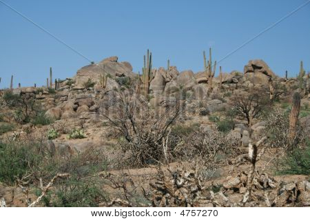 Moonrise Among The Cacti
