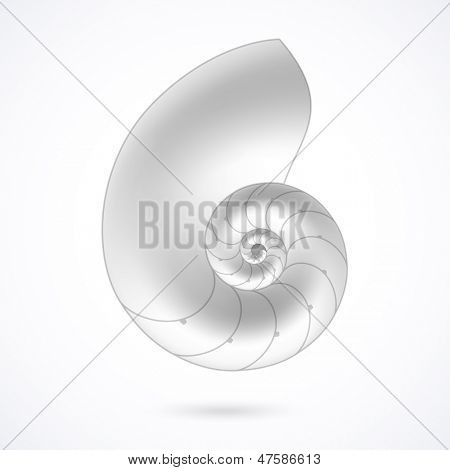Nautilus shell. Vector.