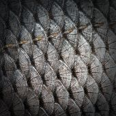 black wall fish scales texture background nobody poster