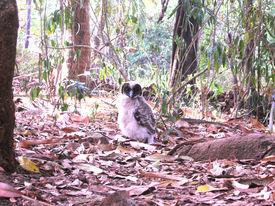 Owlet in the Backyard