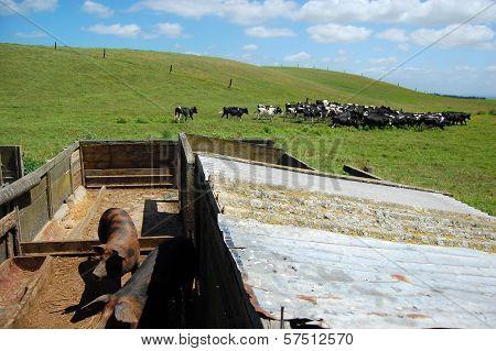 Pigsty At Farmland