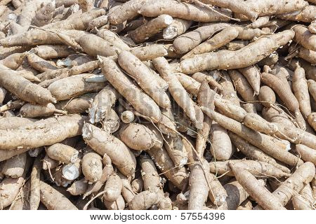 Whole Cassava At Market Place.