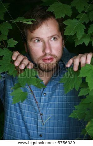 Man Looking Through The Foliage