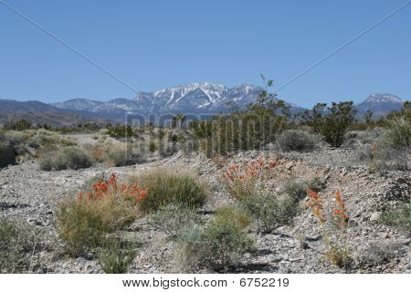 Spring Mountains in Nevada
