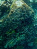 Beautiful underwater world, colourful fish on the reef poster