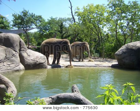 elephants at waterhole poster