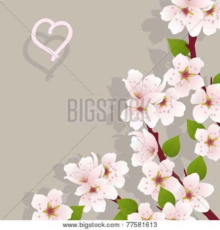 Vector Floral Background With Cherry Flowers