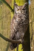 Owl sitting on tree branch - portrait poster