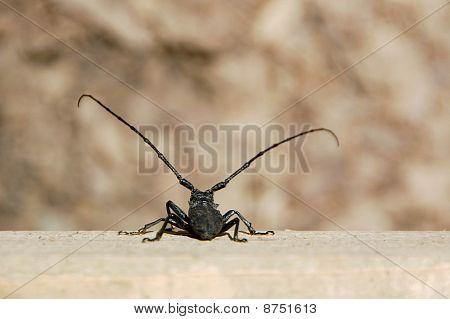 Big Bug Vs. the world
