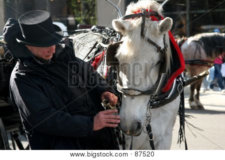 Carriage & Horse