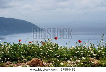 Poppies And Daisies On A Coast.