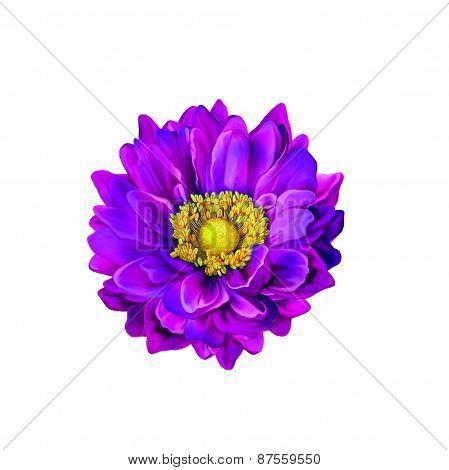 Mona Lisa flower, Colorful flower, Spring flower.Isolated on white background.