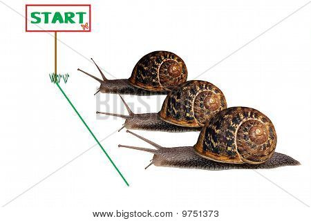 Snail Race  on white