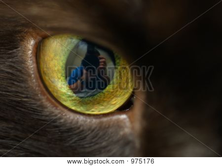 poster of close-up of a cat's eye with reflection of photographer in pupil.