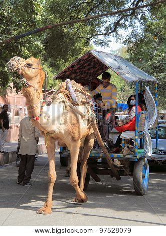camel drag vehicle in Agra