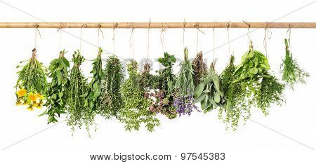 Fresh Herbs Hanging. Basil, Rosemary, Thyme, Mint, Dill, Sage