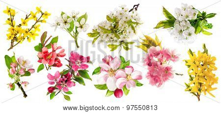 Blossoms Of Apple Tree, Cherry Twig, Pear, Forsythia. Set Of Spring Flowers