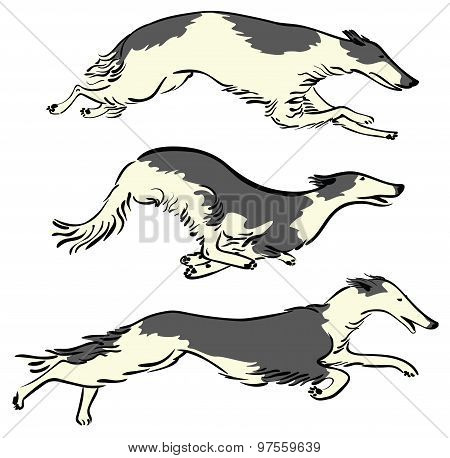 Set with running Russian Borzoi Dogs working dogs