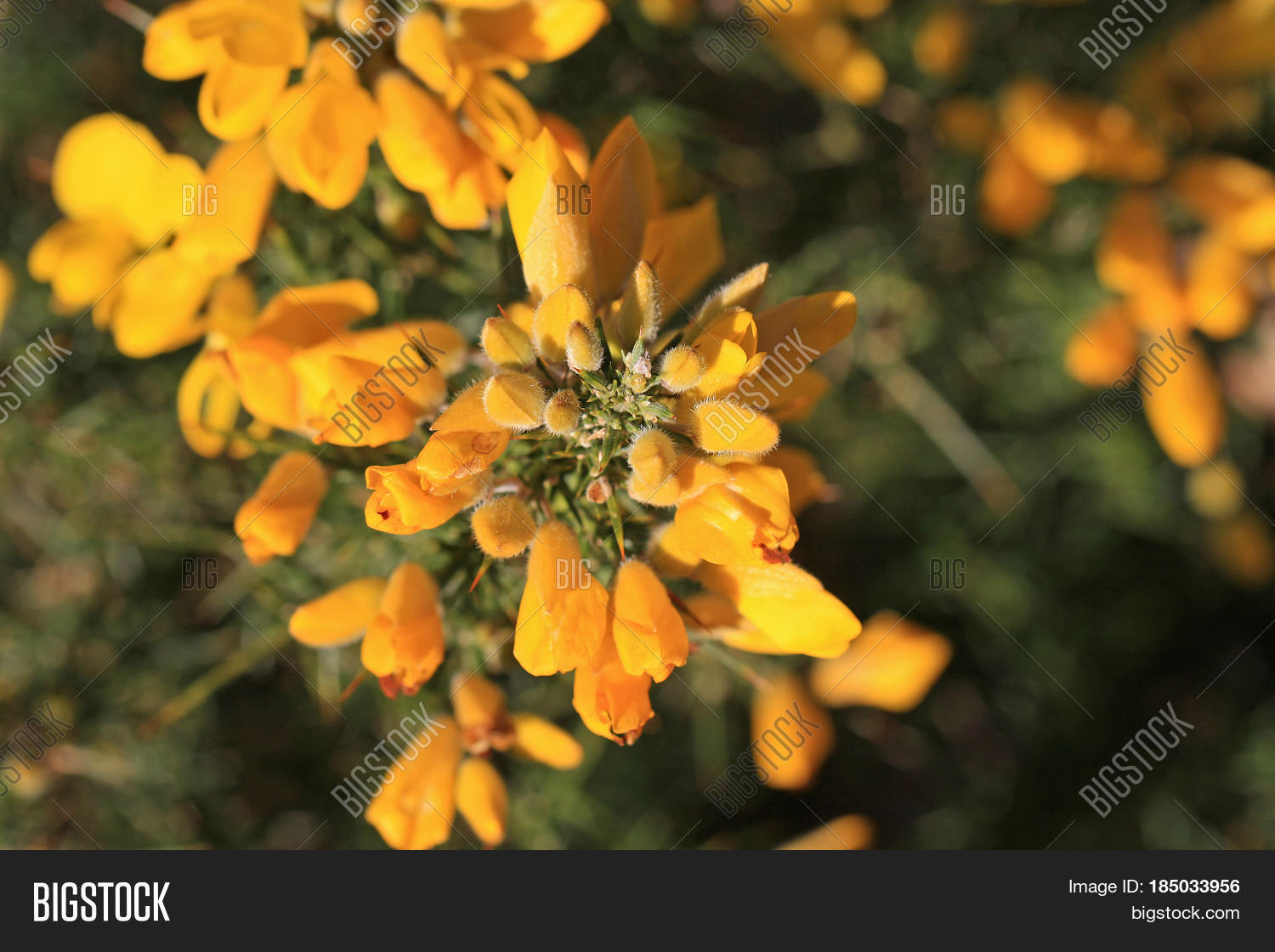 Yellow Flowers On Image Photo Free Trial Bigstock