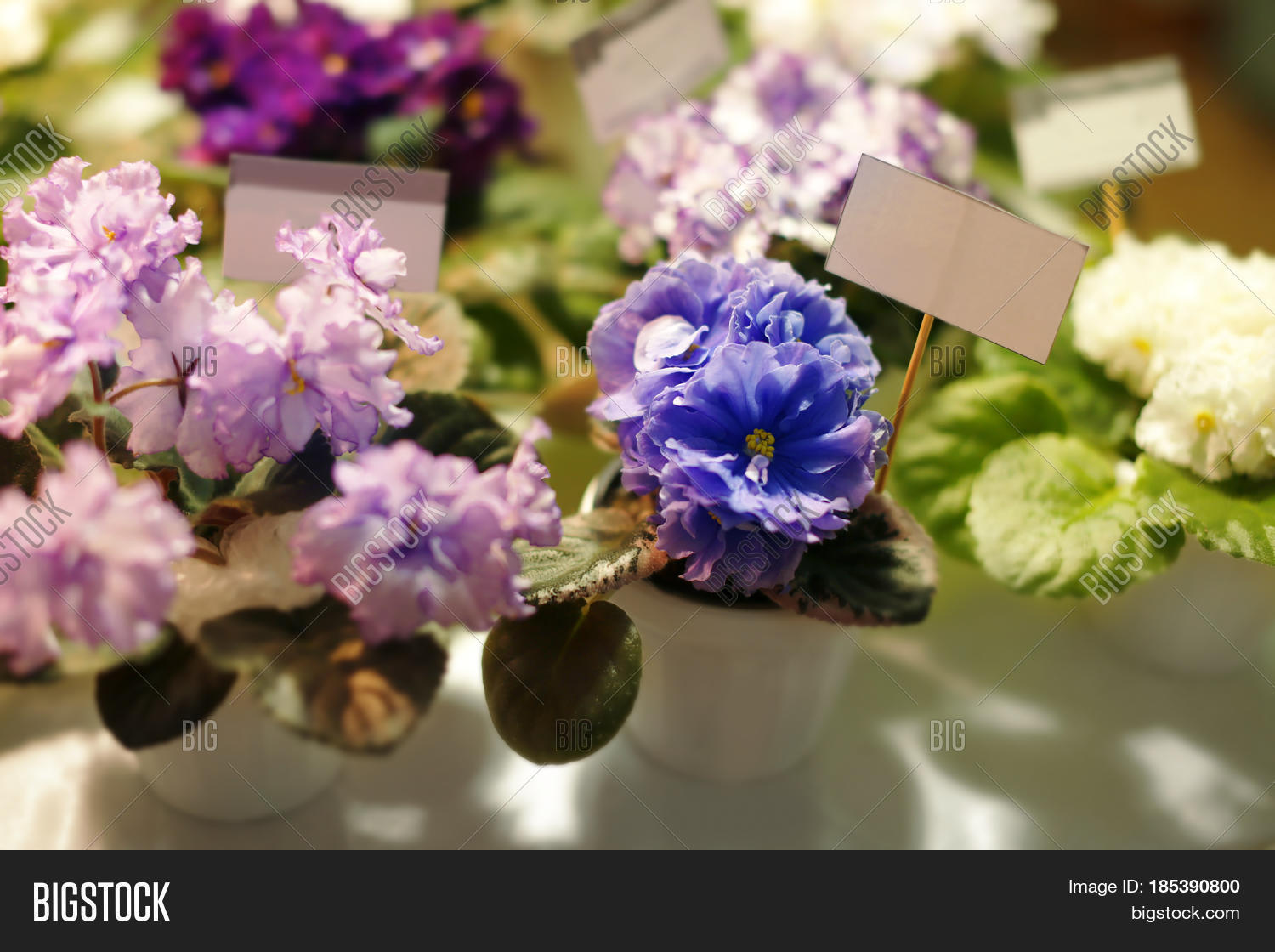 Flower Pots Beautiful Image Photo Free Trial Bigstock