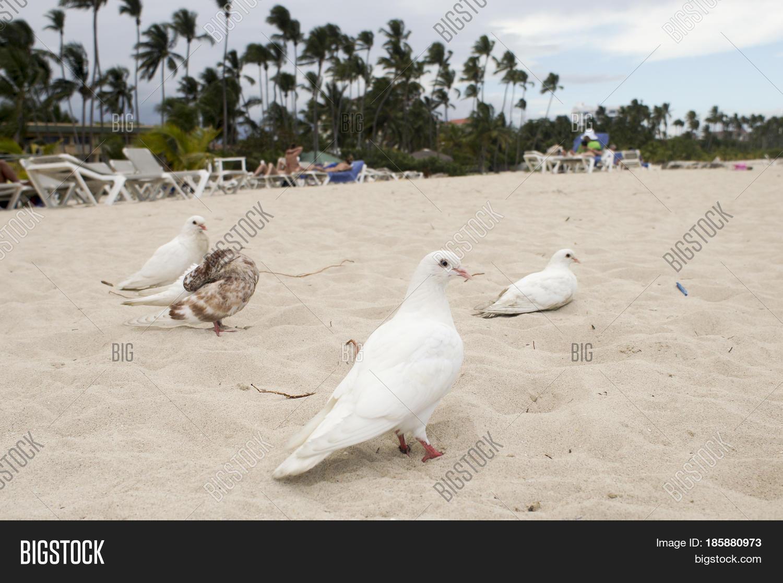 White Dove Sea Symbol Image Photo Free Trial Bigstock