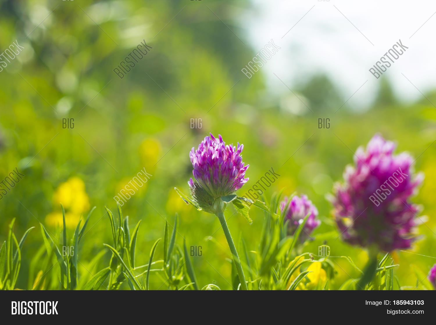 Summer Field Yellow Image Photo Free Trial Bigstock