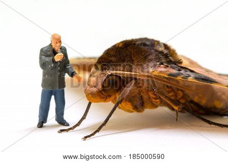 Tropical moth and journalist miniature doll. Real animal with puppet. Television journalist broadcasting news scene. Brown moth head and eyes macro photo. Exotic hawk moth studio shot. Insect closeup