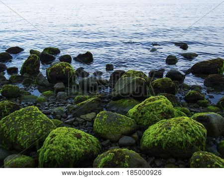 Sea shore with blue water and rippled water. Mossy stones on volcanic beach. Tropical island wild coast. Still sea with sky reflection and water ripples. Exotic island evening. Tropic seaside