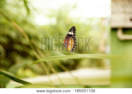 Side View Of Yellow Orange Colorful Butterfly Sitting On Green Leaf In The Garden With Its Wings Hig