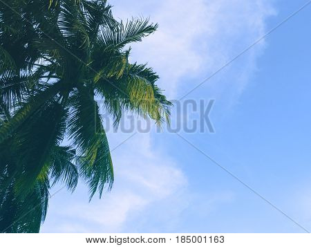 Palm tree crown with green fluffy leaves on blue sky. Green palm leaf banner template. Summer vacation on tropical island. Fluffy palm tree with green leaves. Coconut palm in sunset. Exotic holiday