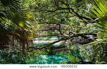 An arched wooden footpath stretches over the hot blue and green geothermal pools set amidst quiet and serene rich and lush tropical vegetation