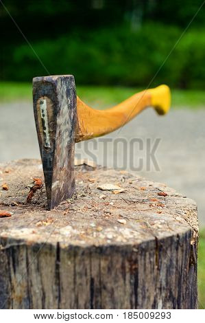 Wood chopping axe stuck in tree stump.Selective focus on hatchet blade stuck in old tree log with forest in the background. This axe is commonly used in making and cutting firewood.