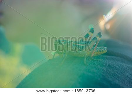 The grasshopper jumped on the girl's shoulder and sits in the rays of sun. A living photo of nature and man. Communication with wildlife.