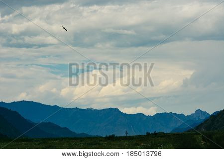 A bird soaring in the sky against a background of vortex clouds. Landscape of the blue mountains The firmament.