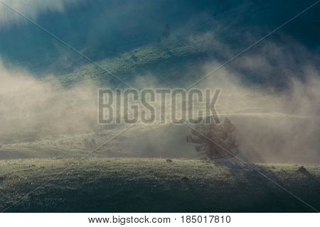 Lonely fir in the misty morning mountains. Hill. Fog. Dawn. Blue landscape.