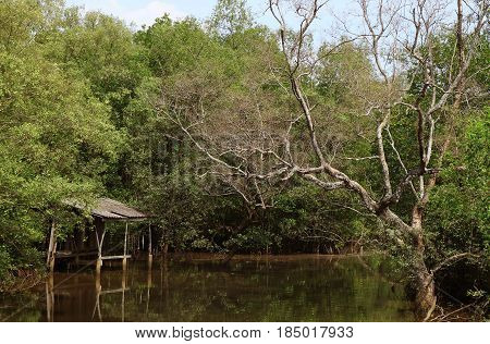 Reflection of Thai style pavilion by the canal in mangrove forest, Trat Province, Thailand