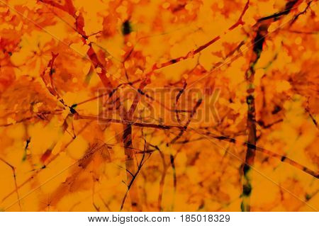 Fall Autumn Abstract Background. Branches leaves. Red orange yellow earthy colors